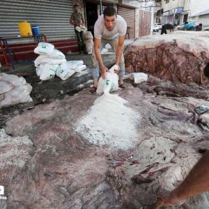 تمليح جلود الأضاحي في غزة