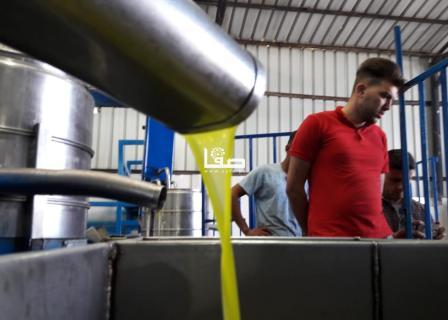 مشاهد مختلفة لعملية قطف وعصر ثمار الزيتون في خان يونس