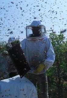 جني العسل وسط قطاع غزة
