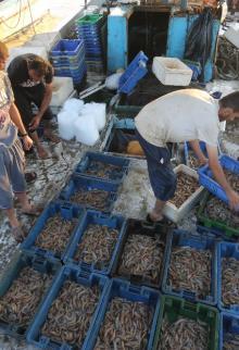 حسبة السمك في غزة بعد سماح الاحتلال بالصيد لمسافة 9 أميال
