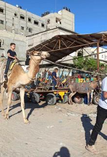 أطفال يلهون بحاراتهم بعد إغلاق متنزهات غزة