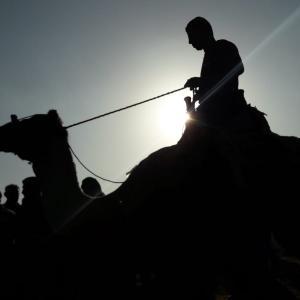 إنطلاق البطولة الأولى لسباق الهجن بغزة