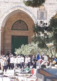 أكثر من ألف مستوطن يقتحمون باحات المسجد الأقصى المبارك منذ صباح اليوم