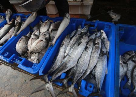 إدخال سمك مصري لغزة عبر رفح
