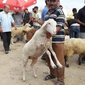 تراجع في أسواق المواشي بقطاع غزة