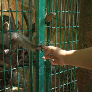 حيوانات في حديقة حيوان قلقيلية