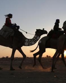 سباقات بالخيول والسيارات والجمال على أرض مطار غزة