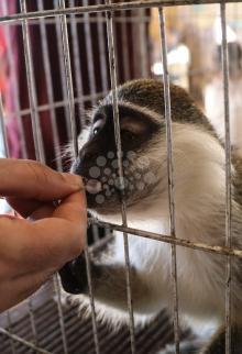 معرض للحيوانات الأليفة بغزة