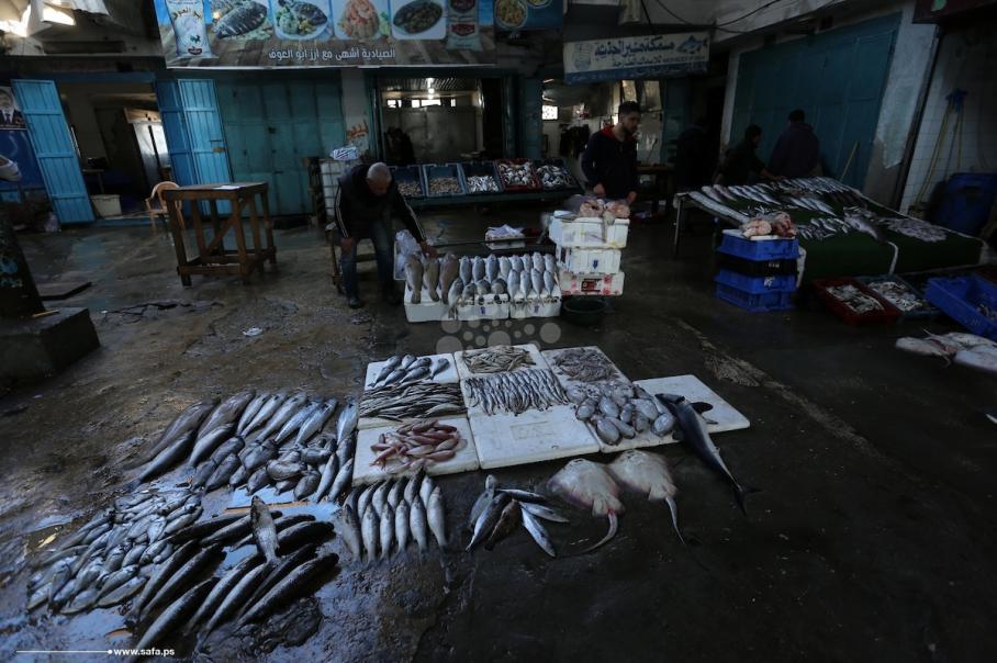 صيادو غزة يعرضون صيدهم قرب الميناء