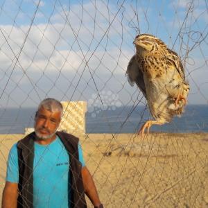 غزة.. بدء موسم صيد طائر السمان الفر المهاجرة