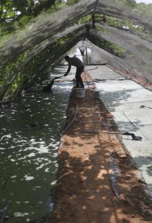 مزارع من غزة ينجح في زراعة نبتة الأزولا