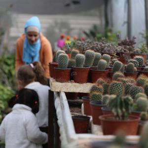 أكبر مشتل للصبار في غزة