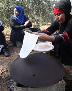 المزارعون والأهالي يواصلون قطف محصولهم من الزيتون