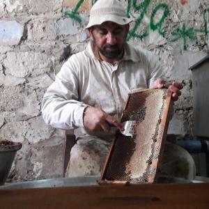 قطف العسل بغزة