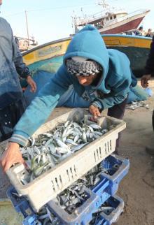 صيد وفير من سمك السردين بغزة