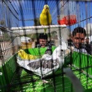 سوق الطيور بمدينة غزة