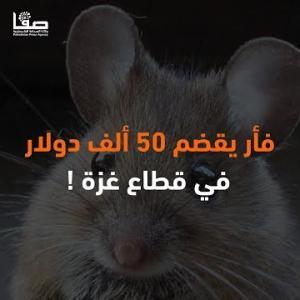 فأر يقضم 50 ألف دولار في قطاع غزة !